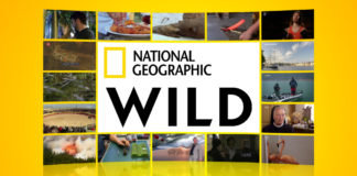 Logo National Geographic Wild