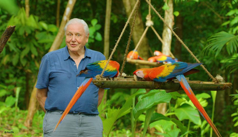 """""""Das Leben in Farbe mit David Attenborough"""""""