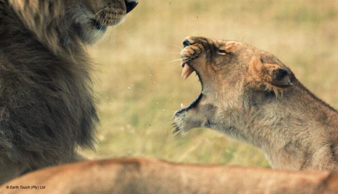 Loewen National Geographic Wild