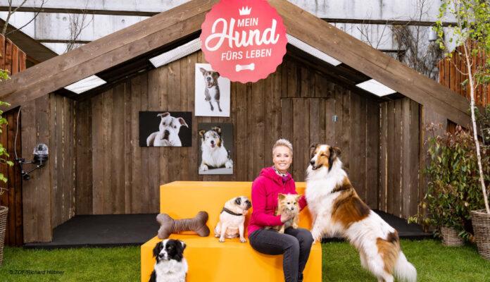 Mein Hund fuers Leben ZDF Sonja Zietlow